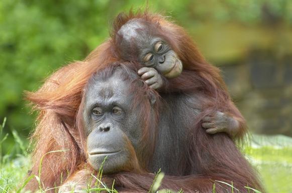 Maleisië en Borneo