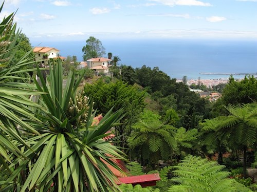 Eeuwig lente op bloemeneiland Madeira