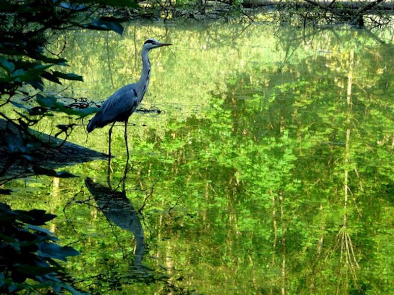 Herfstwandeling in het Zoniënwoud