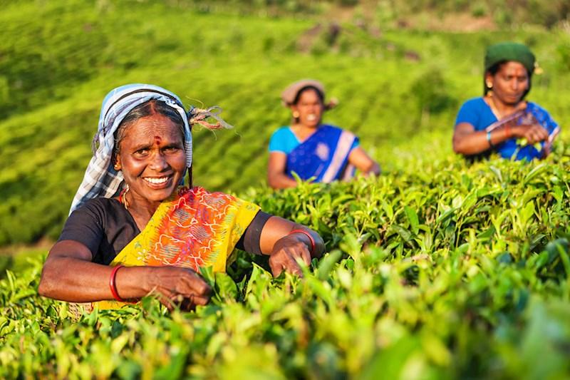 Een zintuiglijke reis door Zuid-India