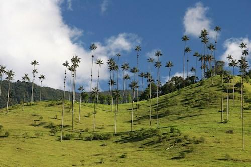 Colombia met jungletrekking in Ciudad Perdida
