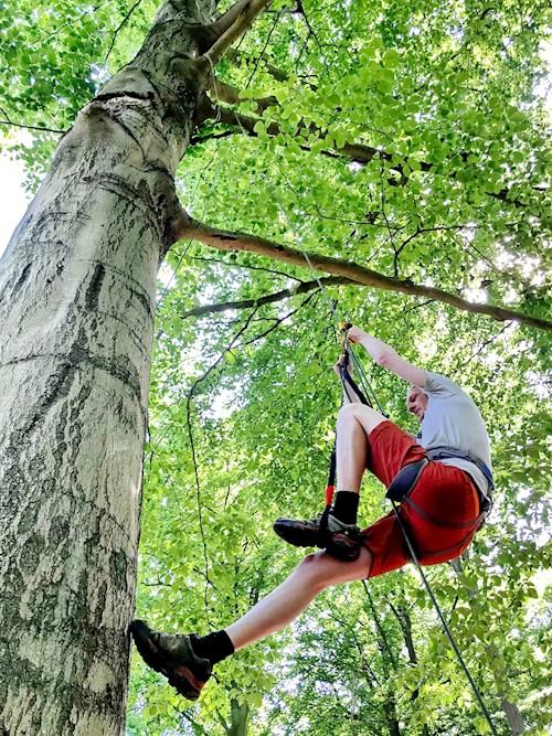 Boomklimmen in het bos